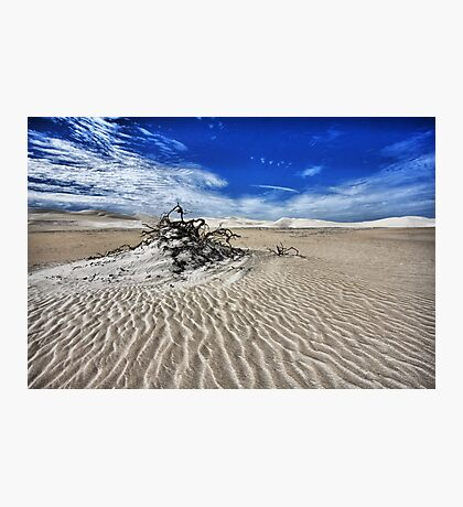 Dead Tree of Reality Photographic Print