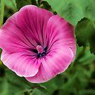 Early Summer Blooms Impressions - Bright Pink Malva by Georgia Mizuleva
