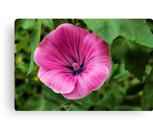 Early Summer Blooms Impressions - Bright Pink Malva Canvas Print