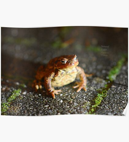""""""" Nocturnal Toad """"  Poster"""