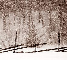 28.2.2012: Fence and Snowfall by Petri Volanen