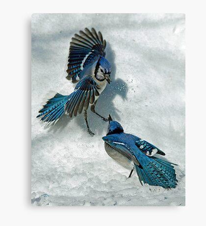 Snow Spat Canvas Print
