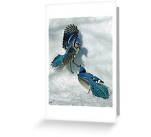 Snow Spat Greeting Card