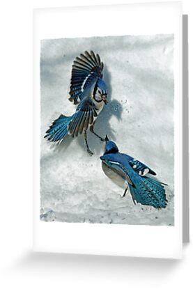 Snow Spat by Brian Pelkey