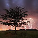 Lightning Tree by Rob  Southey