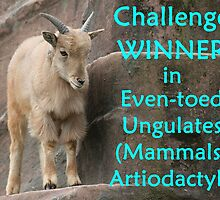 Winner's Banner Even-toed Ungulates by Jenny Brice