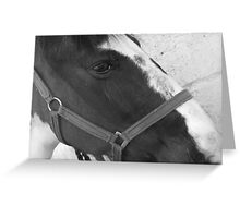 into the horses eye Greeting Card