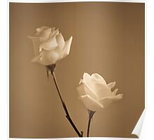 Pair of white roses Poster