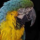 Pretty Polly by Carolyn  Fletcher