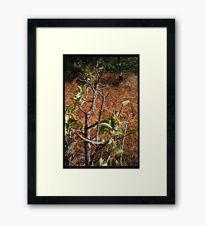 autumn branches Framed Print