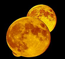 Full Moon  by Carol F. Austin