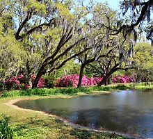 Beauty By The Pond by Cynthia48