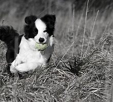 Fetch by Amy Collinson