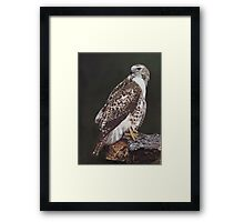 Juvenile Red-Tailed Hawk Framed Print