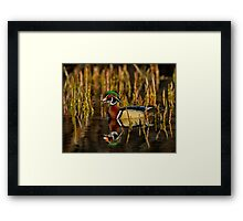 In my pond Framed Print