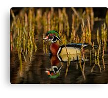 In my pond Canvas Print