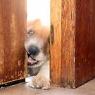 Perhaps if I chew the door off... by Qnita