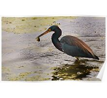Blue Heron Catch Poster