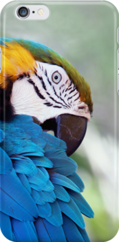 Macaw Parrot by Glennis  Siverson