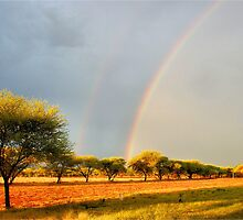 A DOUBLE RAINBOW AFTER THE FIRST RAIN! by Magaret Meintjes