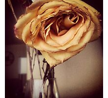 Gold Rose Wilting Photographic Print