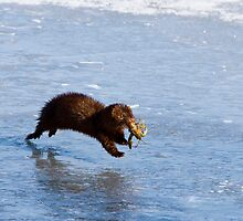 Mink by Richard Labelle