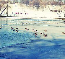 Birds by Geta