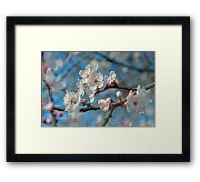 Botanical Blossoms Framed Print