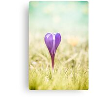 Purple crocus heart Canvas Print