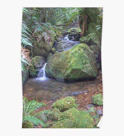 Coachwood Glen, Megalong Valley, NSW Poster