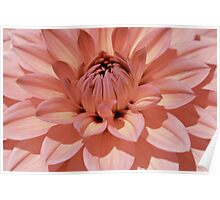 Peach color Dahlia super close up. Poster