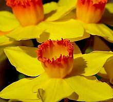 Yellow Flowers, Red Cups by Bruce Moore