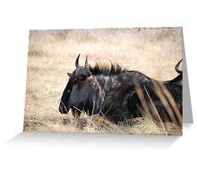 Pilanesburg Wildlife Greeting Card