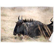 Pilanesburg Wildlife Poster