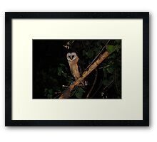 Owl at night Framed Print