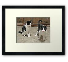 Don't Just Stand There, Help Me! Framed Print