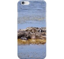 Gators Napping iPhone Case/Skin