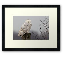Snowy Owl on a fence post Framed Print