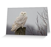Snowy Owl on a fence post Greeting Card