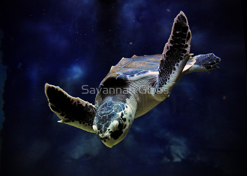 Sea Turtle by venny
