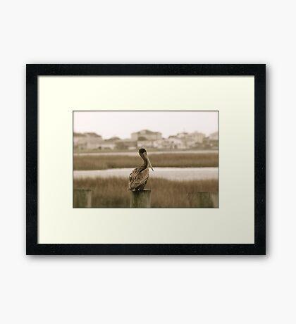 Saltwater Marsh Sentry Framed Print