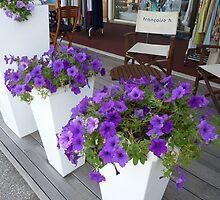 Cap Ferrat Petunias by Fara