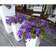 Cap Ferrat Petunias Photographic Print