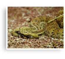 side view of a death adder Canvas Print