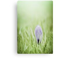 Waking up in silence Canvas Print