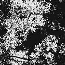Ladies Series - Leaf Abstract by Deborah Crew-Johnson