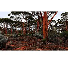 Salmon Gums Photographic Print