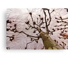 The tree with many arms Canvas Print