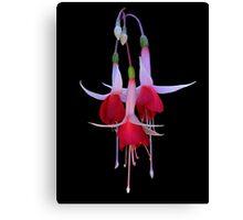 Fuchsia on Black Canvas Print