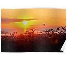 Flocking Sunset Poster